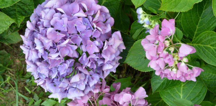 Recherche de b n voles pour le jardin p dagogique de la ville de thiais g n rations jardins for Recherche jardinier pour entretien jardin