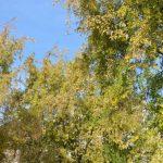Tons d'automne à Thiais